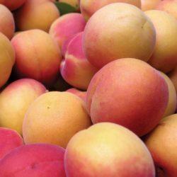 Granville Island Public Market Apricots